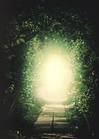 Teleport to another Universe. Tunnel In the Forest. Natural backgrounds