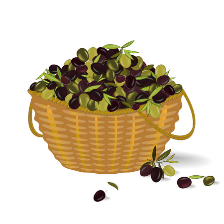 Illustration pour Basket with ripe olives. Olive harvest. Vector illustration - image libre de droit