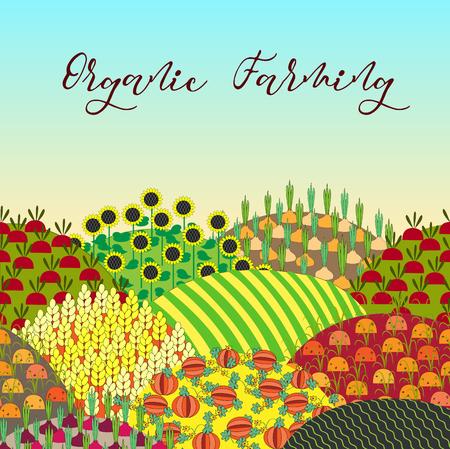 Organic farming background. Pattern with plenteous fields landscape.
