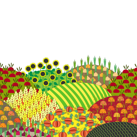Cartoon rural landscape with hills and fields, vector illustration. Organic farming background. Plenteous fields landscape. Place for text. Agriculture background.