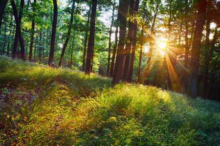Photo pour The bright sun rays shining through branches of trees, wood landscape - image libre de droit