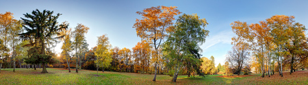 Forest autumn panorama in park