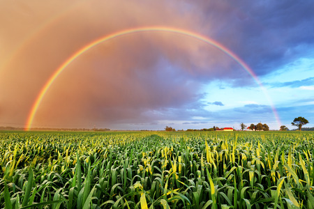 Photo for Rainbow over wheat field, nature landscape - Royalty Free Image