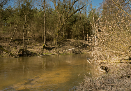 Poland, mazowsze, Swider river flowing wildly through the forest in the vicinity of Otwock, early spring landscape. Horizontal view.