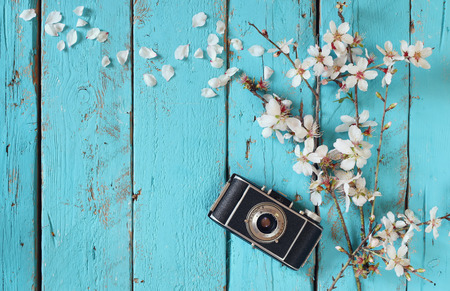 Photo for top view image of spring white cherry blossoms tree next to old camera on blue wooden table - Royalty Free Image