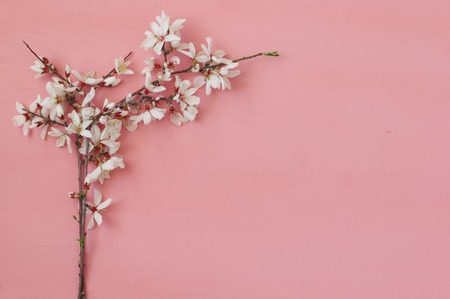 Photo pour image of spring white cherry blossoms tree on pink wooden background - image libre de droit
