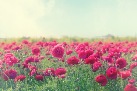 Photo for Image of beautiful pink spring flowers. - Royalty Free Image