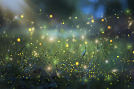 Photo for Abstract and magical image of Firefly flying in the night forest. Fairy tale concept - Royalty Free Image