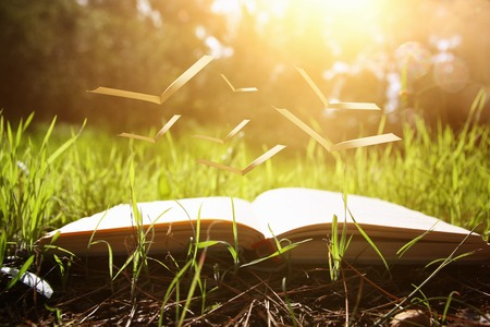 Photo pour open old book with flying pages over green spring grass in forest at sun light - image libre de droit