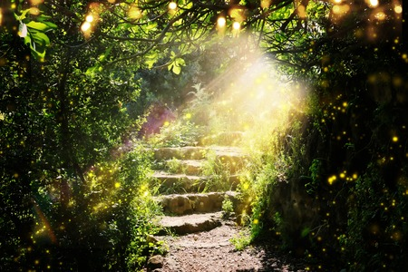 Photo for Road and stone stairs in magical and mysterious dark forest with mystical sun light and firefly. Fairy tale concept - Royalty Free Image