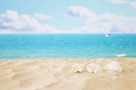 Photo pour Empty sand beach and shells in front of summer sea background with copy space - image libre de droit