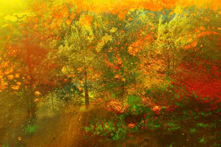 Photo for art concept of double exposure in nature. forest and fall colors - Royalty Free Image