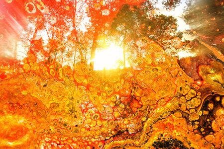 Photo pour art concept of double exposure in nature. forest and fall colors - image libre de droit
