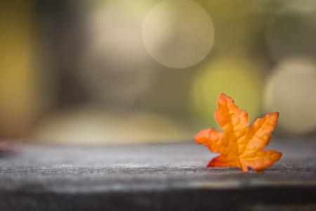 buntes Herbstlaub auf Holz mit farbigem Hintergrund