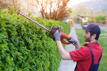 Photo pour Professional gardner dressed with safety overalls using an hedge clipper - image libre de droit