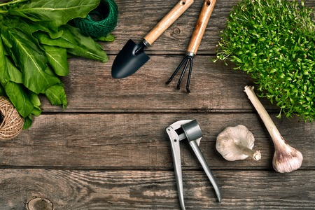Gardening tools and greenery on wooden table. Spring in the garden