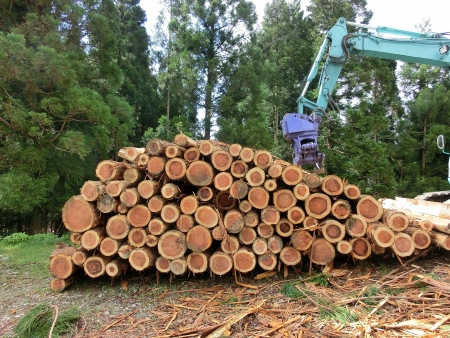 piled logs and a harvester