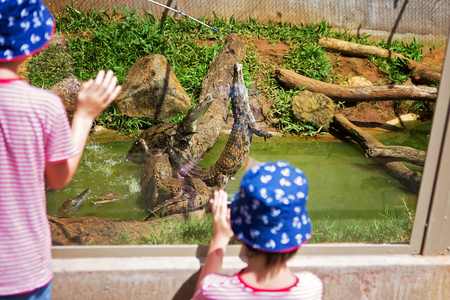Foto de Little boys at exotic zoo, watching and observing crocodiles while feeding with fresh meat - Imagen libre de derechos