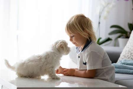 Foto de Cute little blond child, toddler boy, playing with white puppy maltese dog at home - Imagen libre de derechos