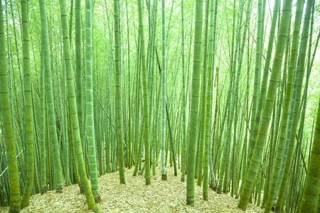Bamboo murals bamboo forest wallpaper for Bamboo forest mural