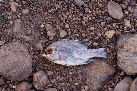 Dead die fish.