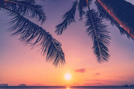 Photo pour Palm tree at tropical beach on sunset sky abstract background. Summer vacation and nature travel adventure concept. Vintage tone filter effect color style. - image libre de droit