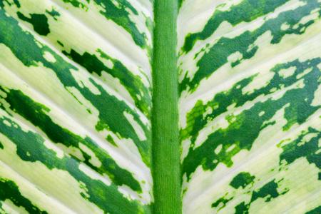 Photo pour Green leaf texture - image libre de droit