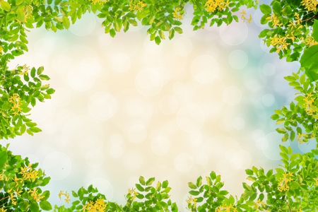 Photo for green leaves frame on bokeh background - Royalty Free Image