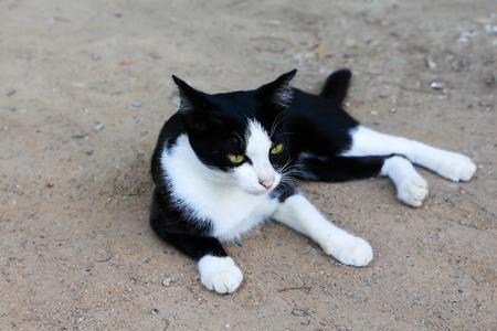Photo pour Homeless cat in thailand - image libre de droit
