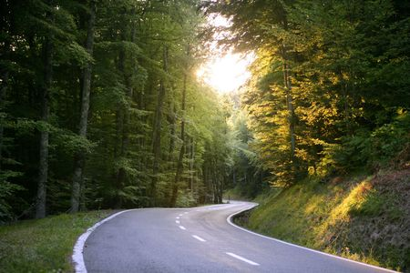 Asphalt winding curve road in a beech green forest