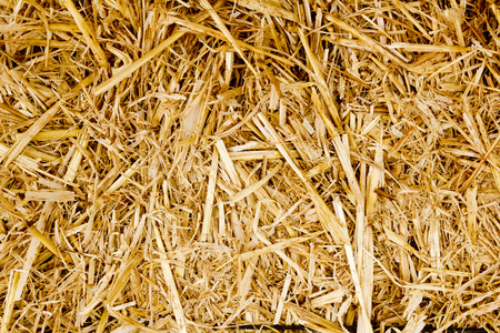bale golden straw texture ruminants animal food background