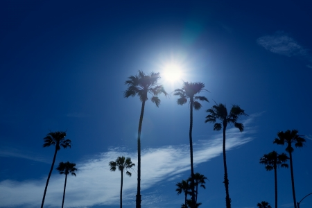 Palm trees in southern California Newport area with sun glowing