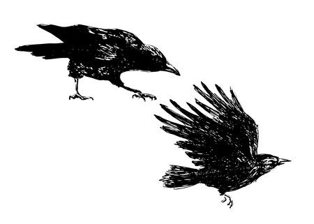 Illustration pour hand sketch of crows - image libre de droit