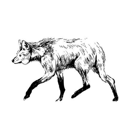 Illustration pour Hand sketch maned wolf. Vector illustration - image libre de droit