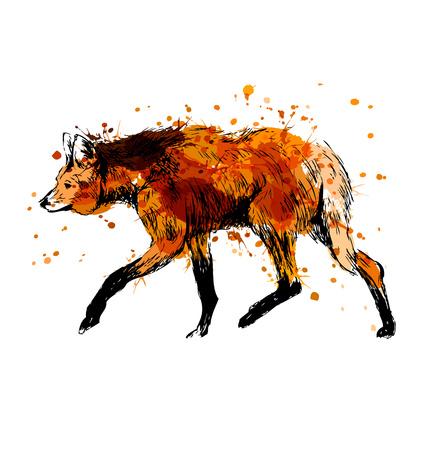 Illustration pour Colored hand sketch maned wolf. Vector illustration - image libre de droit