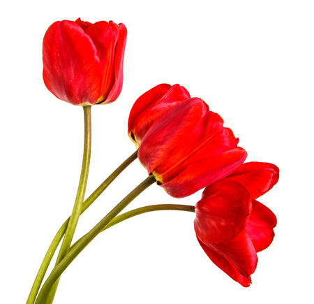 Photo pour Bouquet of red tulips. Isolated on white - image libre de droit