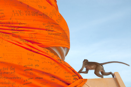 Monkey play climbing orange large cheesecloth.