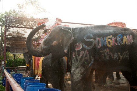 Elephants spray water on themselves happily.