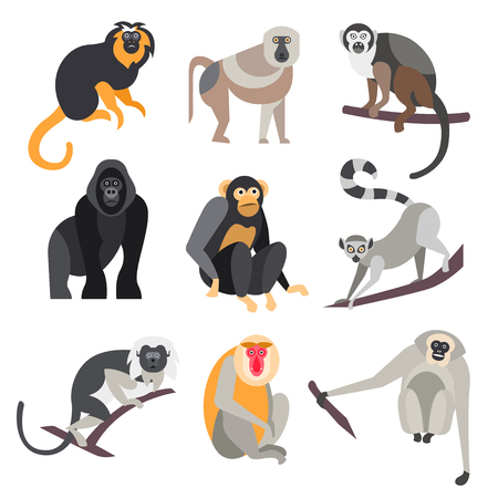 Collection of primates in flat style, illustrationのイラスト素材