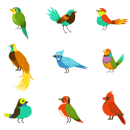 Exotic Birds From Jungle Rain Forest Collection Of Colorful Animals Including Species Of Paradise Birds And Parrots
