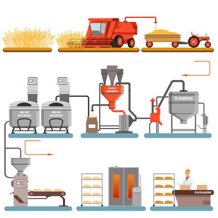 Bread production process stages from wheat harvest to freshly baked bread vector Illustrations isolated on a white background