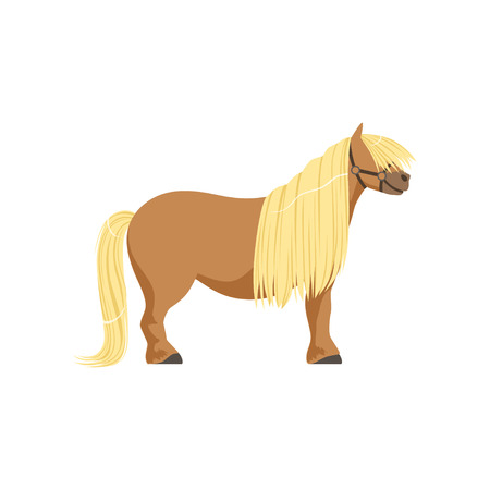 Shetland pony, thoroughbred horse vector Illustration