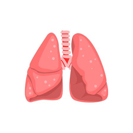 Ilustración de Human lungs, internal organ anatomy vector Illustration on a white background - Imagen libre de derechos