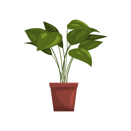 Ilustración de House plant in brown pot, element for decoration home interior vector Illustration on a white background - Imagen libre de derechos