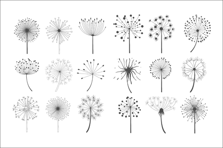 Illustration pour Dandelion flowers with fluffy seeds set, floral silhouettes design elements vector illustration on a white background. - image libre de droit