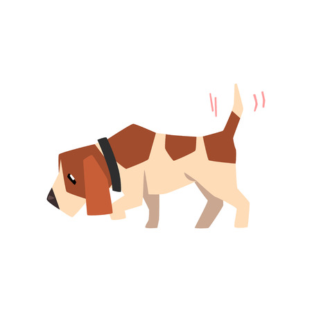 Beagle dog searching for a trace and wagging its tail, cute funny animal cartoon character vector Illustration isolated on a white background.