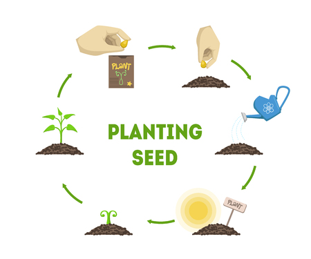 Illustration pour Planting Seed Banner, Stages of Growth of Plant from Seed Timeline Infographic Vector Illustration - image libre de droit