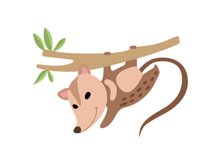 Illustration pour Cute Opossum Hanging on Tree Branch, Adorable Wild Animal Vector Illustration on White Background. - image libre de droit