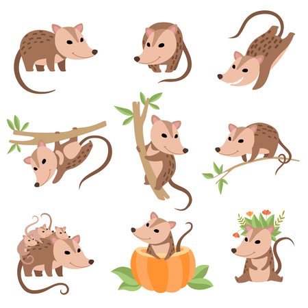 Illustration pour Cute Opossums Animals in Various Poses Set, Adorable Wild Animals Cartoon Characters Vector Illustration on White Background. - image libre de droit
