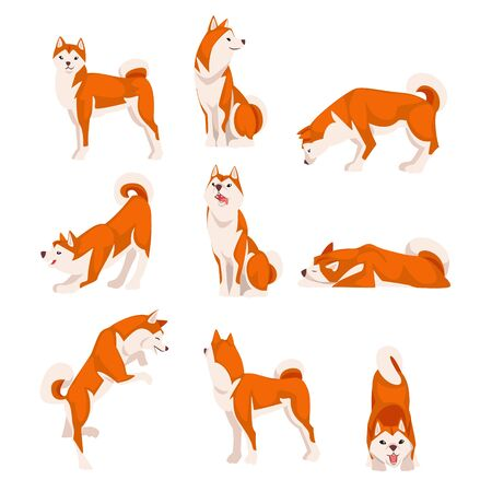 Illustration pour Shiba Inu Dog in Various Poses Set, Cute Japan Red White Fluffy Pet Animal Vector Illustration - image libre de droit